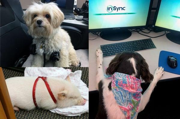 InSync Healthcare Solutions Fido Fridays